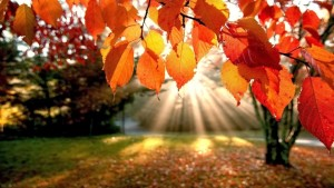 autumn-leaves-trees-the-rays-nature-1140x641